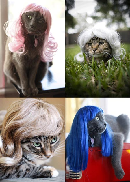 Meow...what a haute mess!